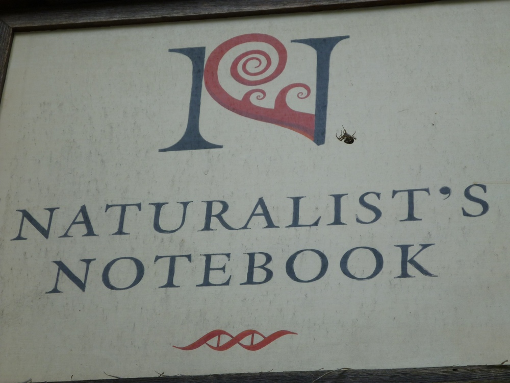 A Notebook visitor from this past season sent us a kind note and shared a photo she took of our front sign—complete with a spider that she found mesmerizing.