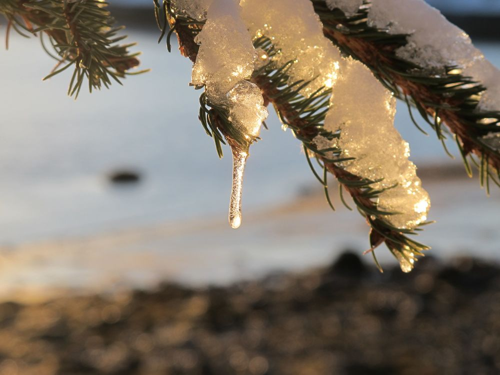 Natural tinsel? The big chill has set in for New Year's week.