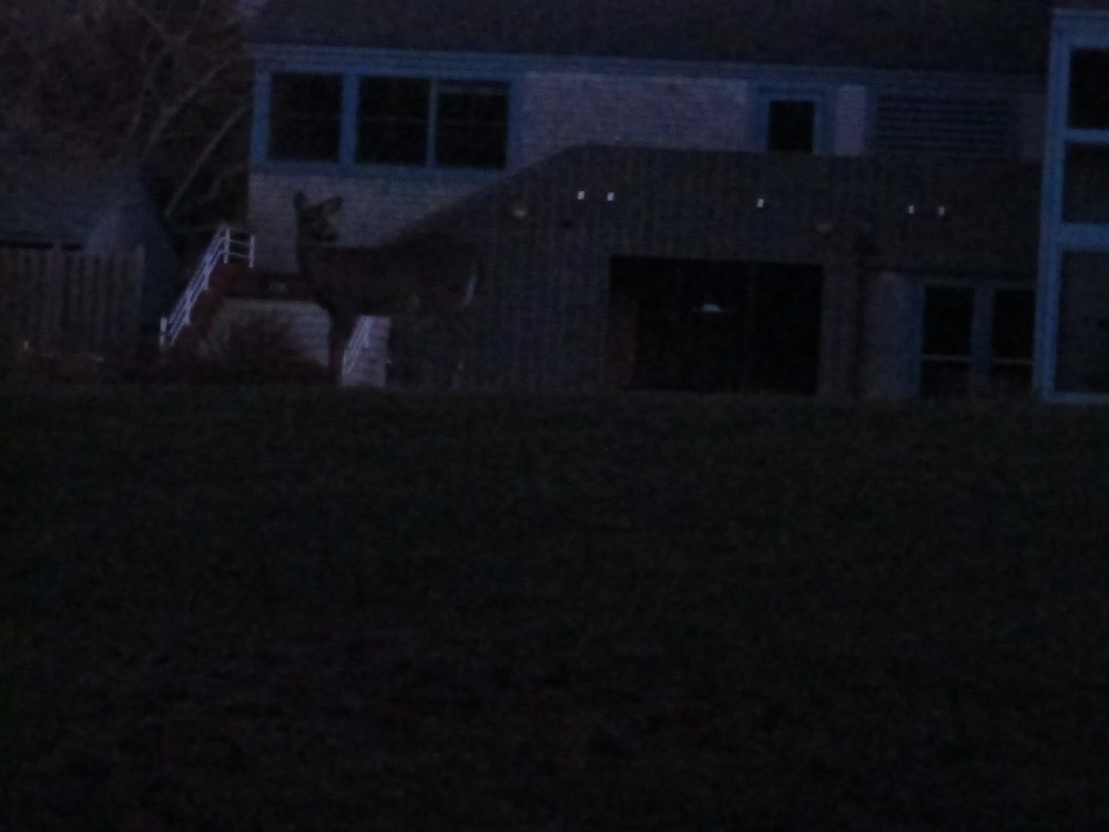 No, the deer outside the Pond House wasn't eating popovers (inside joke).