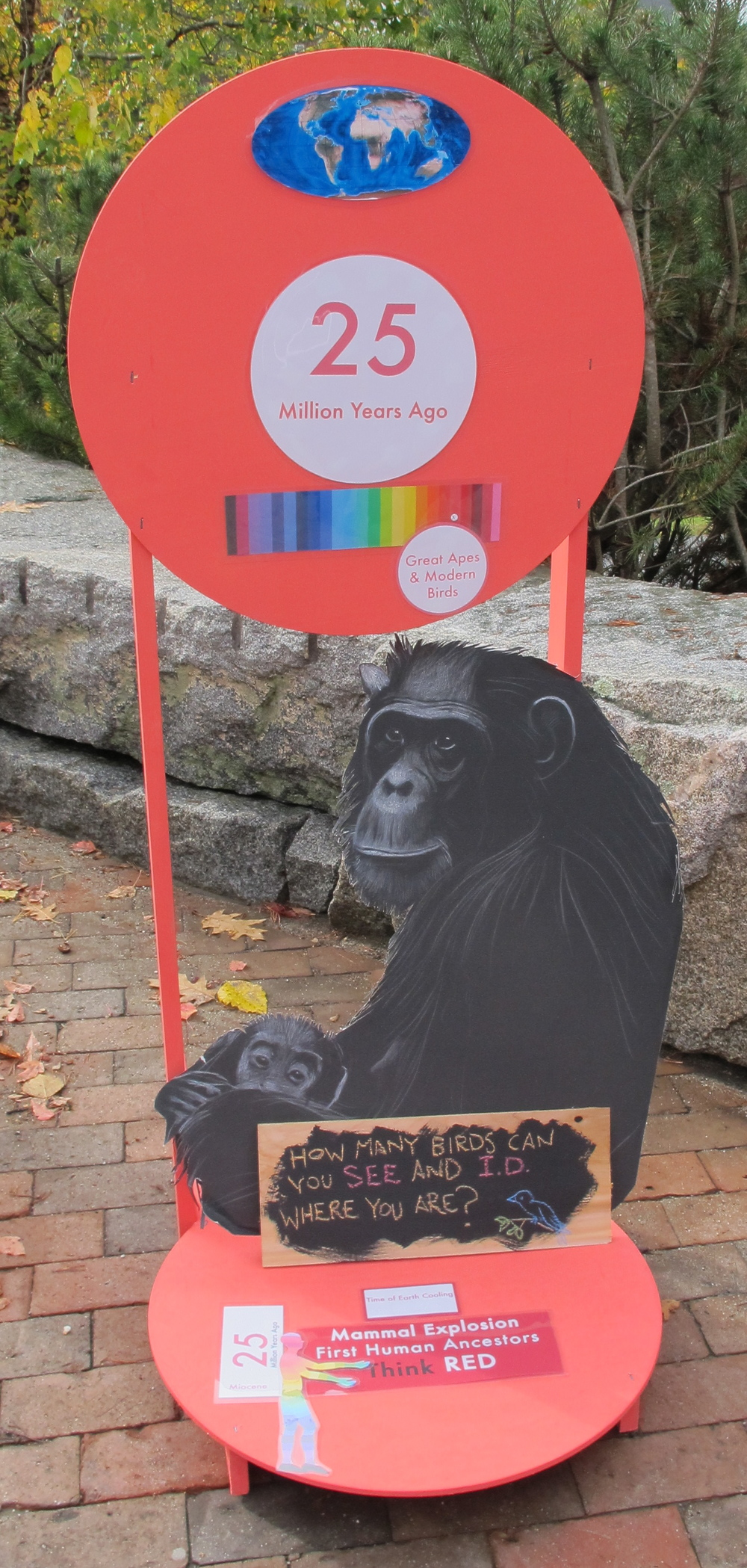 We added one of the chimp illustrations from Jane Goodall Day at the Notebook.