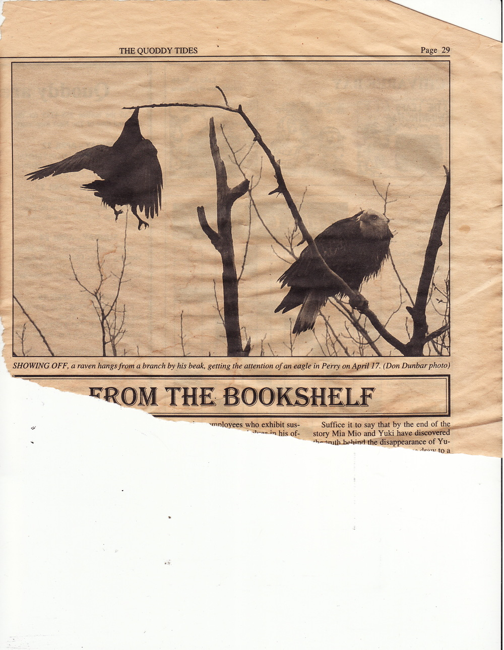 John saved this clipping from an old copy of a Maine newspaper, The Quoddy Times. As the caption notes, the raven seems to be trying to get the eagle to fly.
