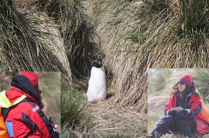 Pamelia ventured off to sketch a lone rockhopper that emerged from the tussock grass.