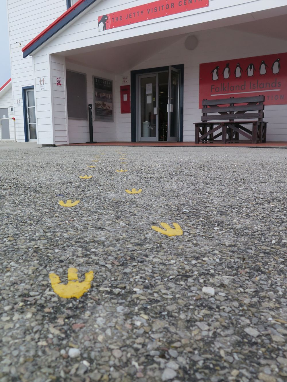 In Stanley all penguin tracks lead to the visitors' center...