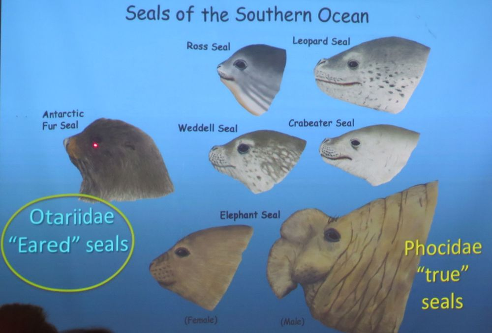 We would see all of these except the Ross seal, which lives closer to the South Pole.