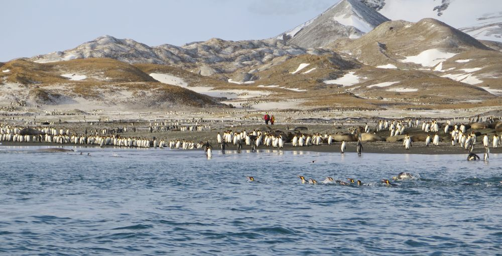 We saw more of them swimming, heard their loud chatter and whiffed the tangy smell of penguin guano as we neared shore.
