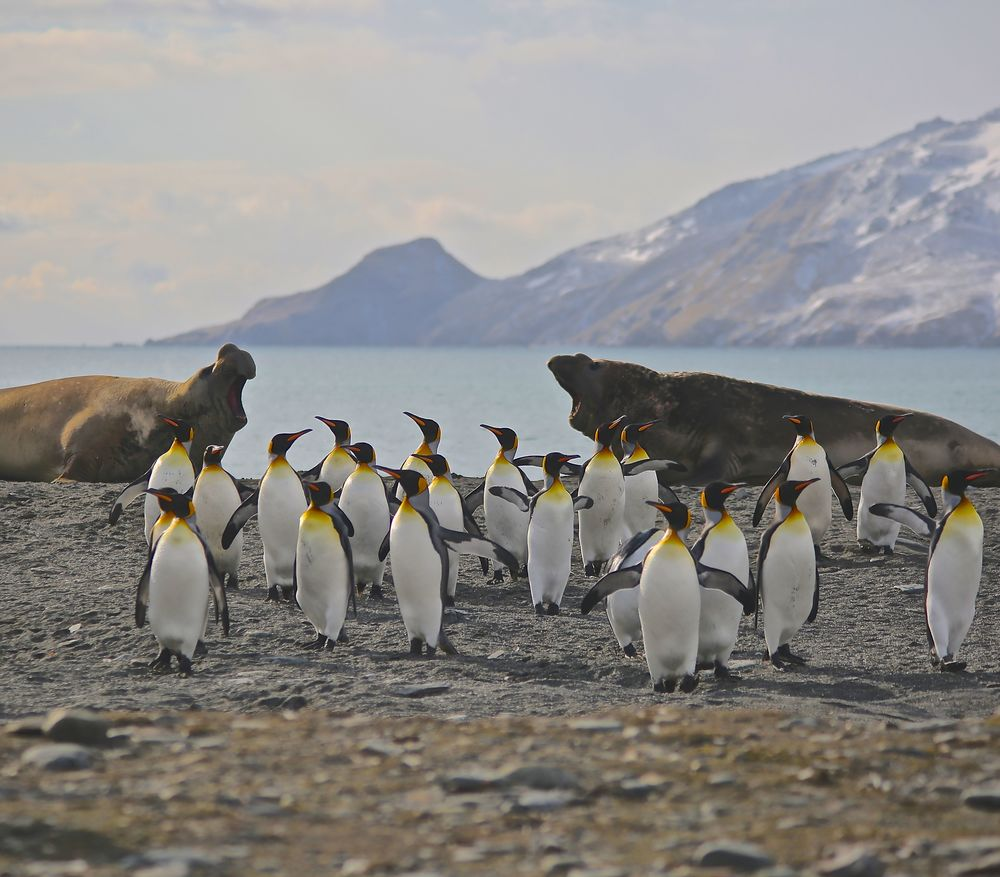 The penguins and seals coexisted comfortably...