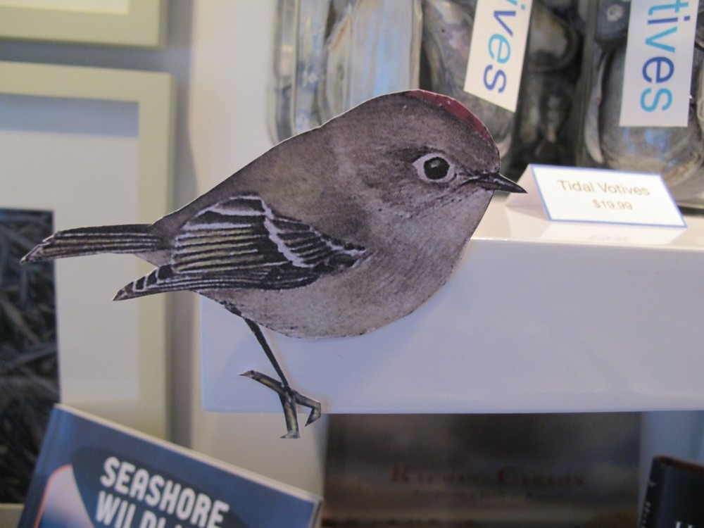 Pick up your bird checklist and try to find the 45 species we've perched throughout our three floors.