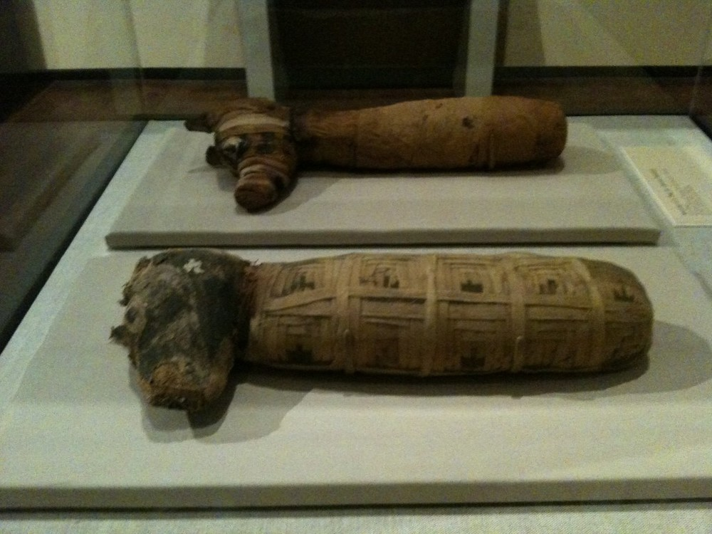 The mummified dogs.