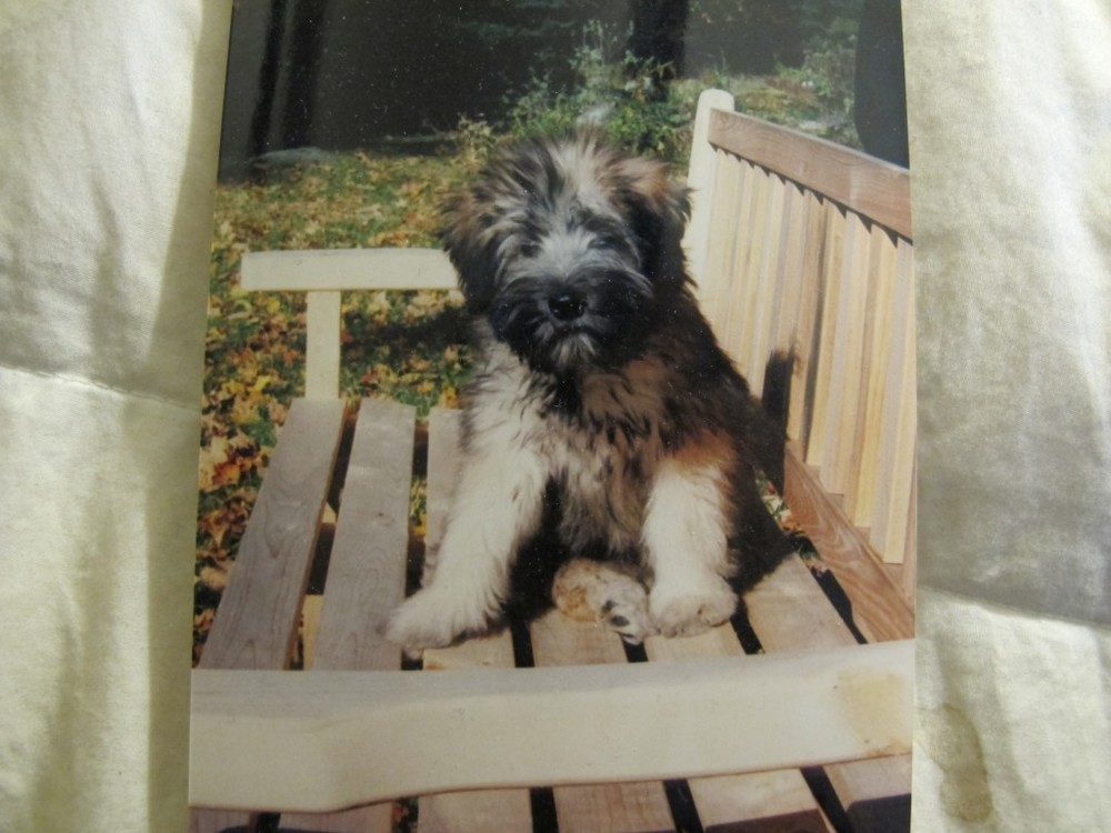 Wooster as a puppy.