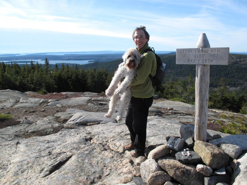 Wooster adapted happily to life in Maine. Here she's taking a breather after leading us up Cedar Swamp Mountain in Acadia National Park.