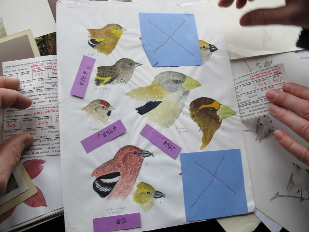 Some of his work, such as this painting of winter finches, still had the Post-it notes stuck on by his book publishers as instructions to printers.