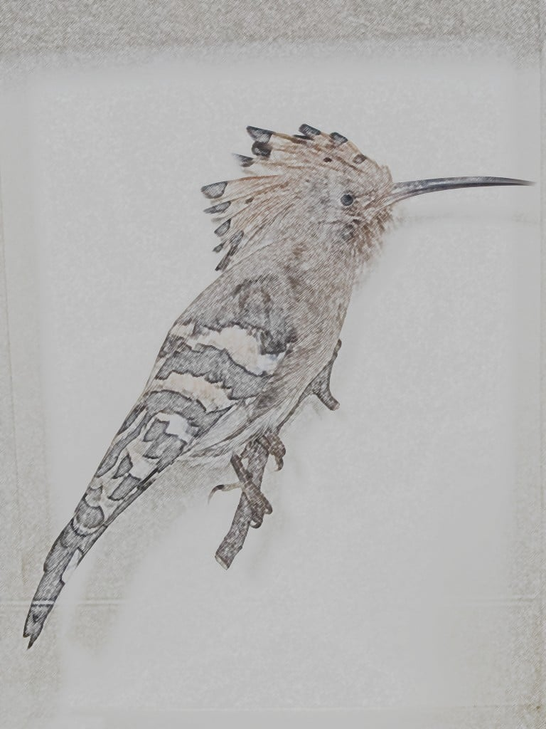 This is a hoopoe specimen that Pamelia photographed at the Natural History Museum in London and I photo-doctored with a colored-pencil tool.