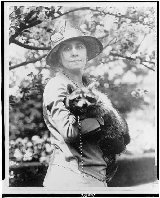 Calvin Coolidge's wife, Grace, with their pet raccoon. Among the other animals the Coolidges kept in the White House were a pair of collies, a donkey, a bobcat, canaries, a goose and a mockingbird.