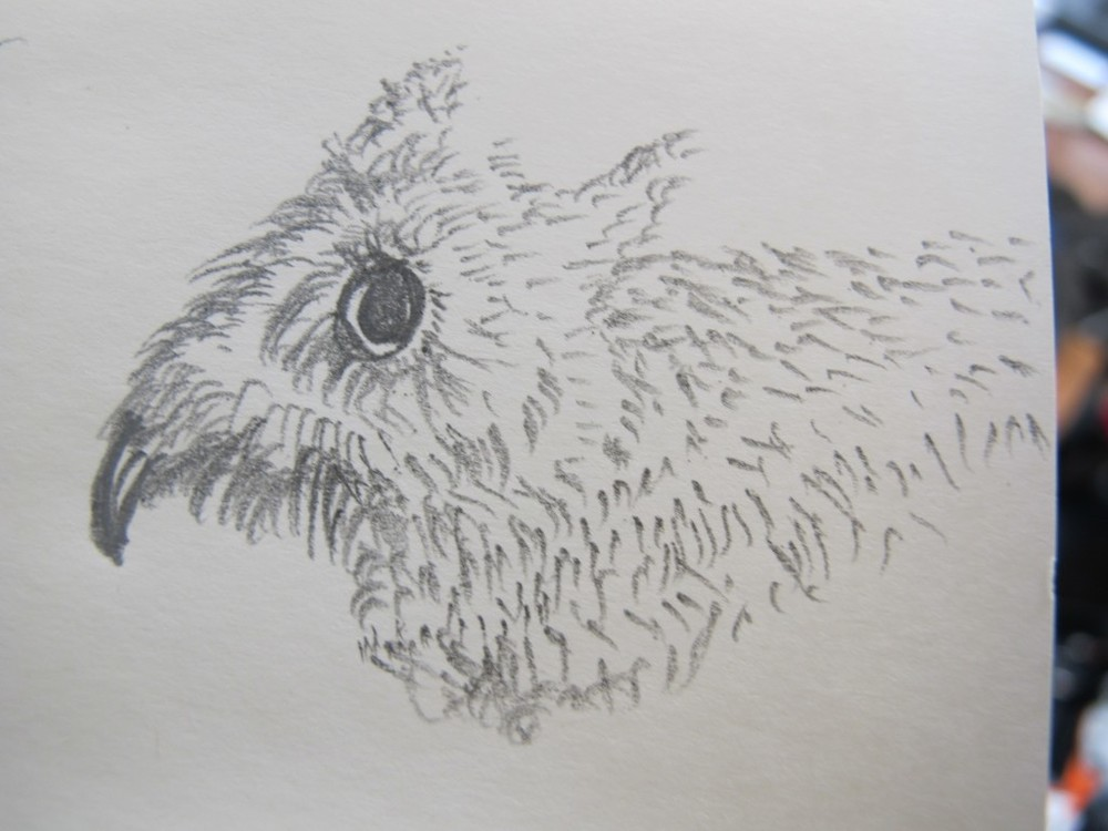 O.K., so odd things happen sometimes. I like this little creature I sketched...but I was trying to draw an owl. Midway through, I realized I was blundering badly, so I channeled my inner Charles Darwin and hastened the evolution of what I decided to call a beaver-toothed mouse.