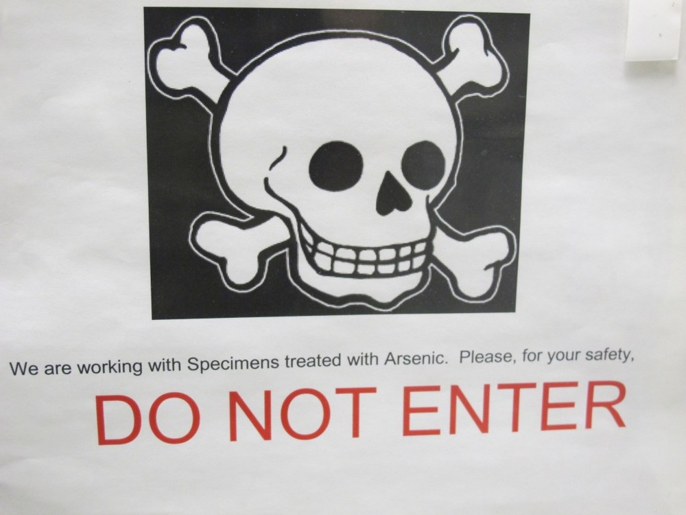 This sign on the door to the main archive room was not a joke. The bird specimens, which are kept in tight-sealing, glass-doored metal lockers, were long ago treated with arsenic, which killed the microbes that would have gradually destroyed the specimens. Pure arsenic may be odorless, but arsenic compounds can smell quite unpleasant. The birds and other preserved animals in the archive exude a strong garlicky, chemical odor that I couldn't take for too long.