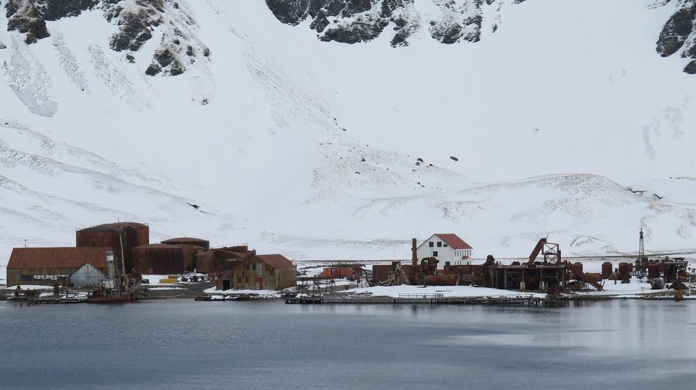 "Between 1904 and 1965, the whaling complex at Grytviken killed and ""processed"" at least 30,000 (I've seen numbers closer to 60,000) whales, reducing them to commercial products such as oil, meat, food-additive powder and even glycerine for World War I and WWII explosives. The total slaughtered by whalers based at South Georgia's various stations totaled 175,000, according to zoologist Mark Carwardine, our trip organizer, who's a leading whale expert."
