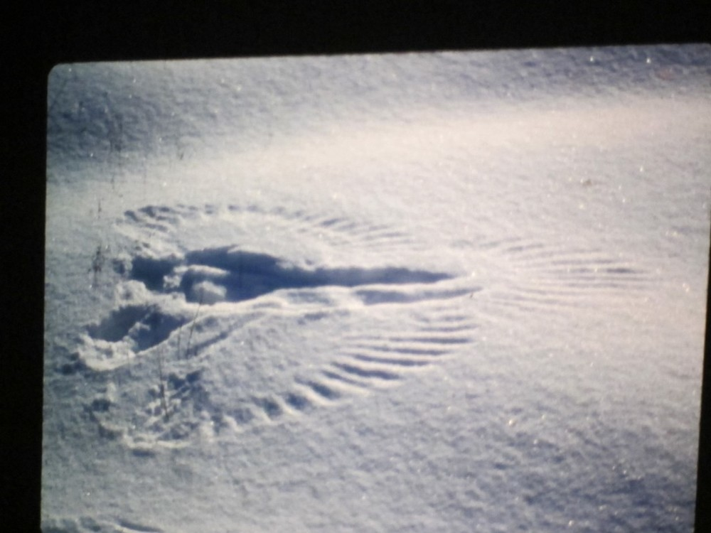 Can't end on that gory note, so here is a raven snow angel that Bernd came across.
