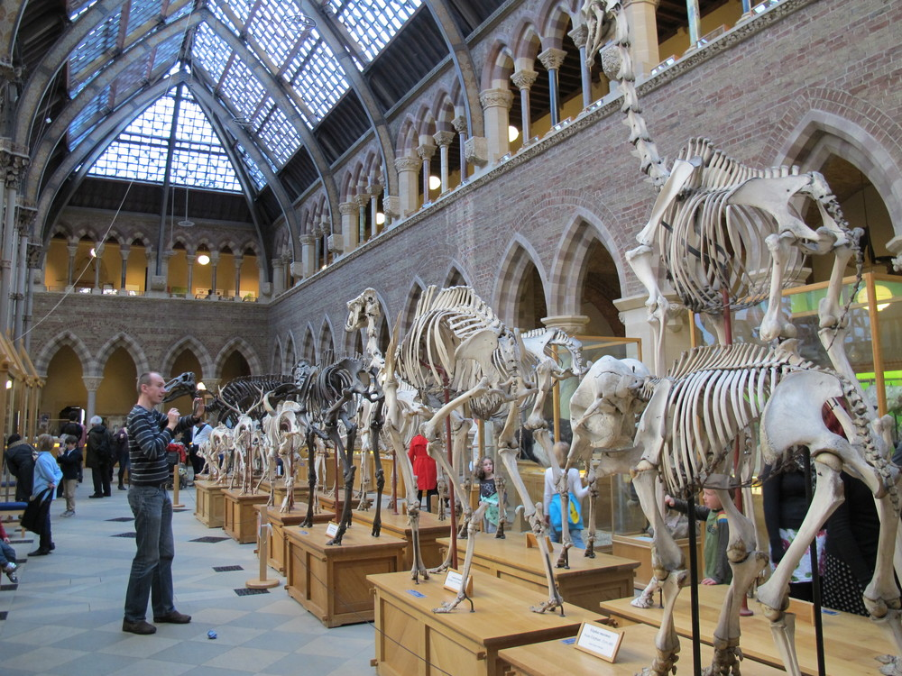 The museum's architectural bones are nearly as striking as those of its stampede of great mammals.