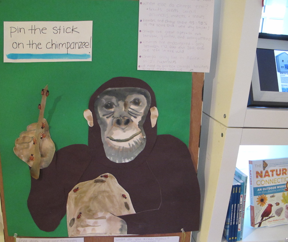 Where else but the Notebook can you play games that help you learn about chimpanzees?