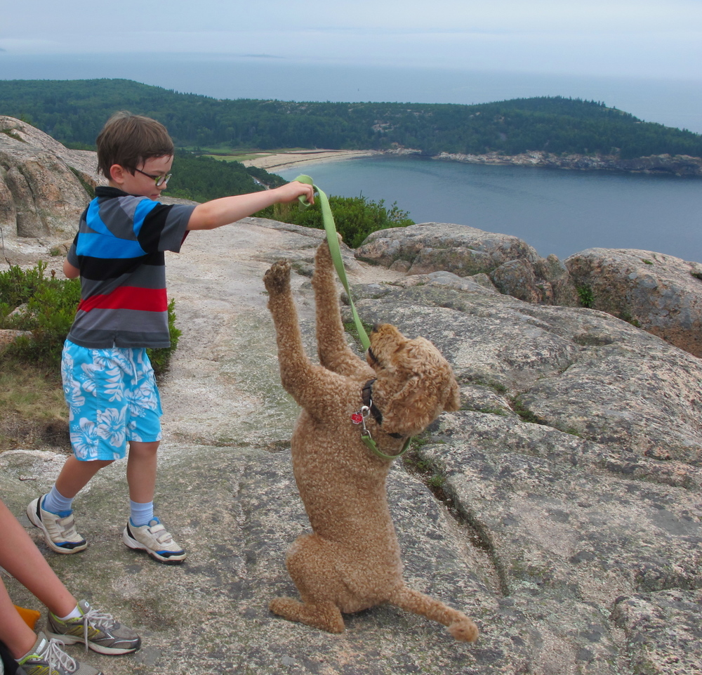 We took a break to climb Gorham Mountain, overlooking Sand Beach in Acadia National Park. Hazel the sweet labradoodle was plenty excited, as was our young friend Harrison, a visitor from Paris.
