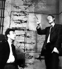 Watson (left), Crick and the double helix of DNA.