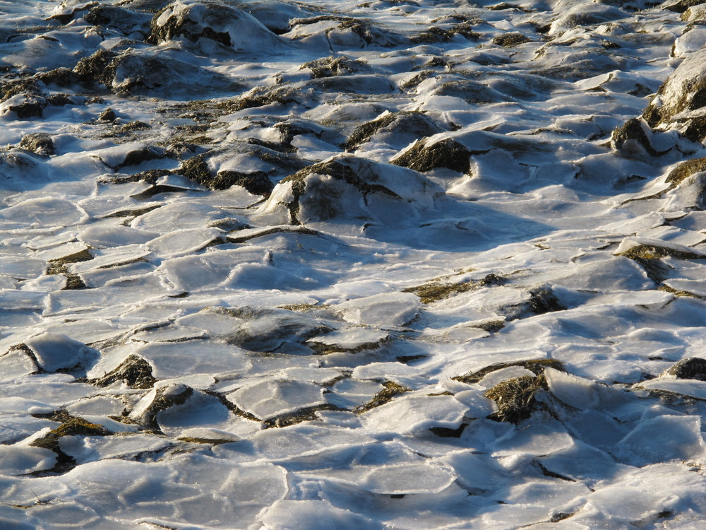 At low tide on extremely cold days, ice forms on the exposed bay floor in six-sided disks more than a foot in diameter. Not coincidentally, these hexagons are the same shape as snow crystals, honeycombs, the patterns on turtle shells and pineapples, and other forms found in nature.