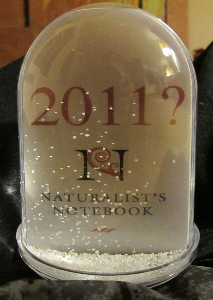 What stories will the new year bring? Shake the snow globe and find out.