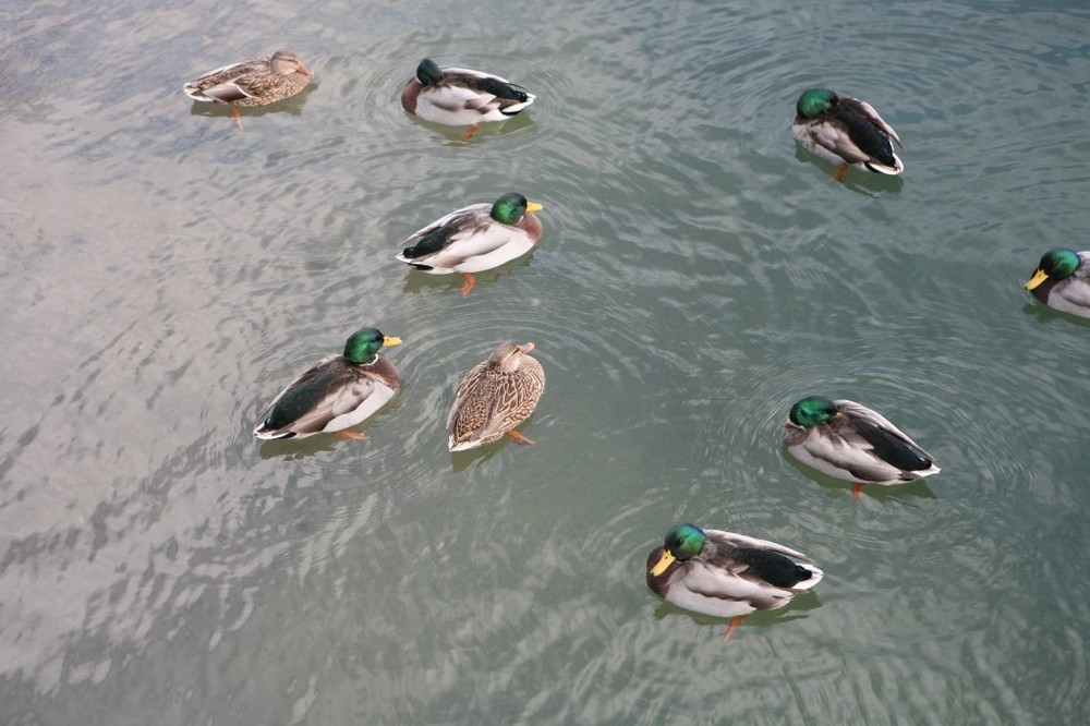 "Baseball fans might also refer to these as ""ducks on the pond."" Though those are usually limited to three at a time."