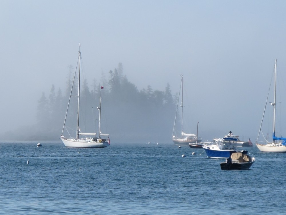 sealharbfogThis week in Seal Harbor: Though we've had gorgeous weather, the fog on the ocean forced the cancellation of several whale-watching trips from nearby Bar Harbor.