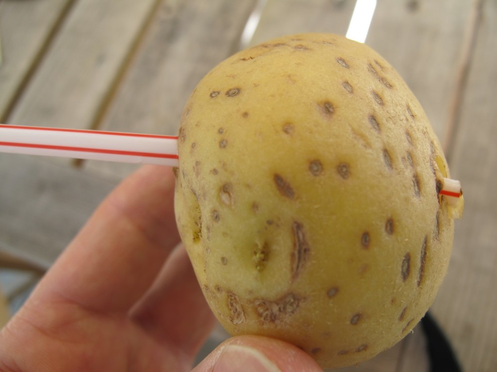 Who needs The Sword In the Stone when you can have the Straw In the Potato?