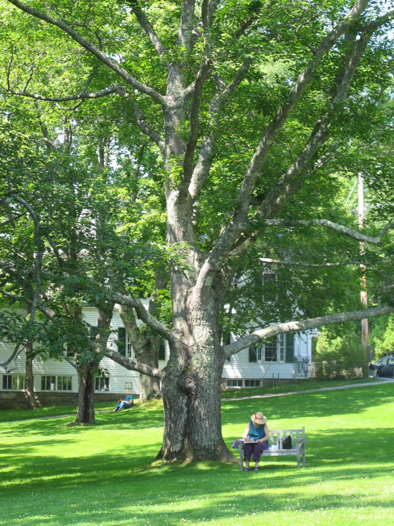 Others preferred the shade of the Seal Harbor town green, just a couple of hundred feet from the Notebook.