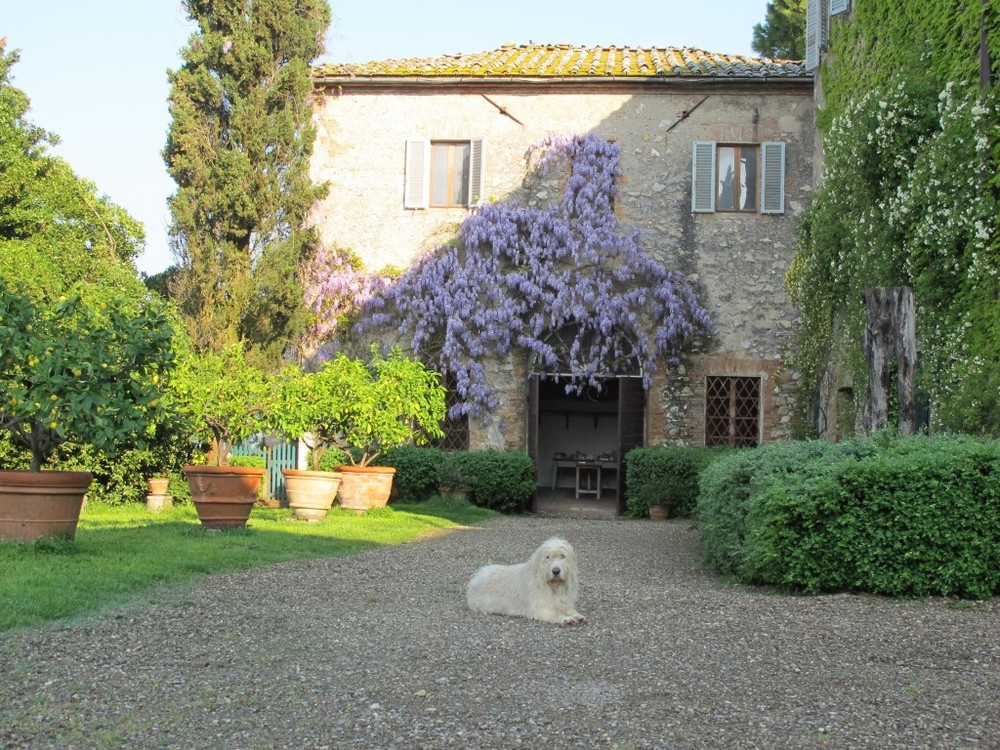 Lapo, one of the resident dogs, liked lounging outside the wisteria-draped studio.