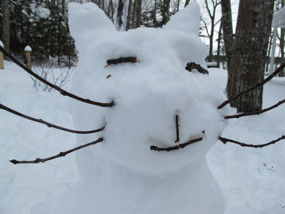 The January snow that buried the Notebook also brought to life a frisky snow cat!