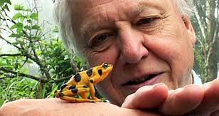 DAVID ATTENBOROUGH , conservationist, zoologist, legendary broadcaster and author of 25 books, including  The Life of Birds ,  The Life of Mammals  and  The Living Planet