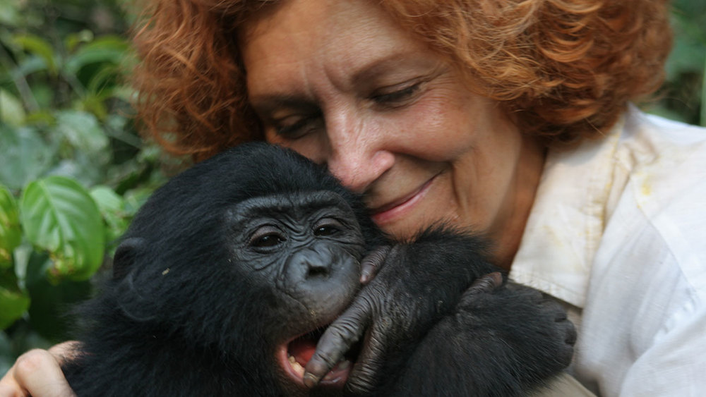 CLAUDINE ANDRE , conservationist, bonobo researcher, founder of the Lola ya Bonobo sanctuary in the Republic of Congo in Africa and star of the documentary  Bonobos: Back to the Wild