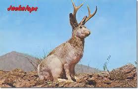 The jackalope.