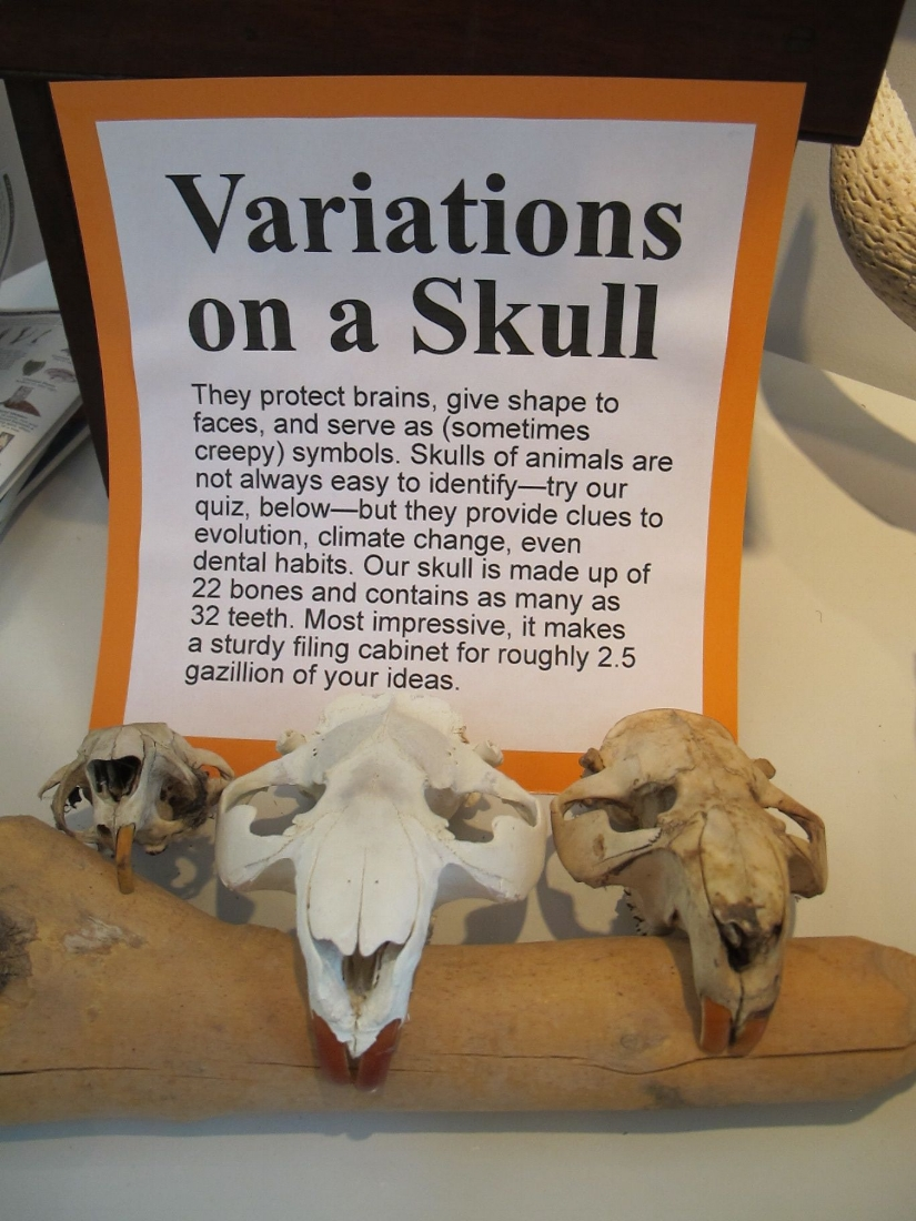skullvariations2010.jpg