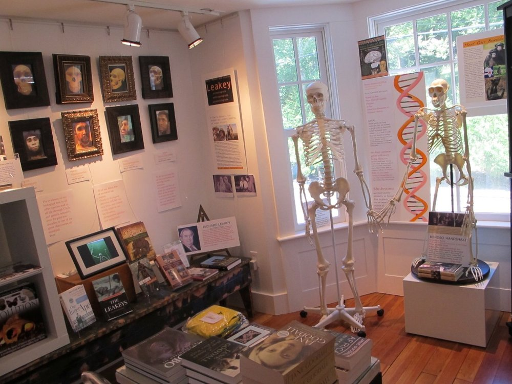 Our 2010 primate room upstairs included a portrait gallery of extinct human species, tributes to Jane Goodall and the Leakey family, and casts of both a human skeleton and a bonobo skeleton (our closely related species have 99 percent the same DNA). Most visitors loved learning more about humans' deep ancestry, though some Notebook visitors separated the hands of the two skeletons, possibly disturbed by the reality that we are related to other primates.