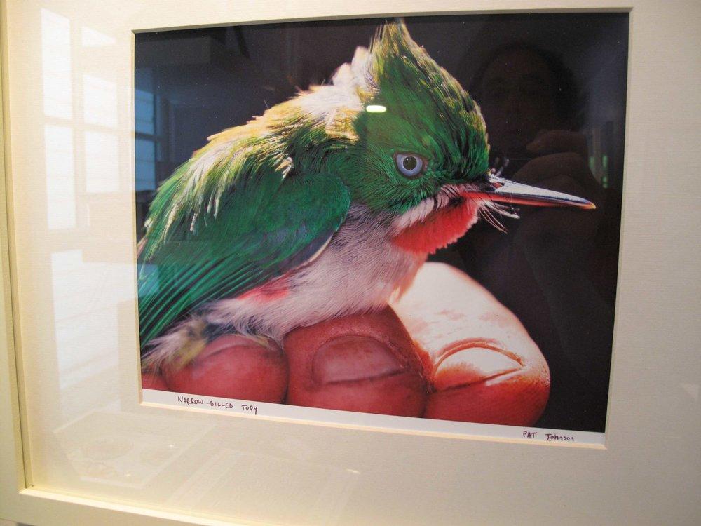 birdnarrowbilledtodypatjohnson2009SM.jpg