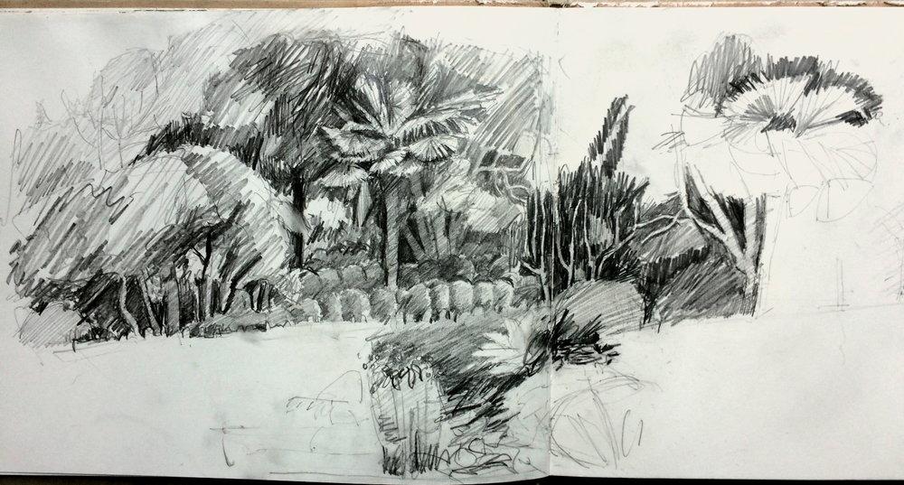 Ella Clocksin (2016)later stage of unfinished sketchbook drawing at Overbecks National Trust garden.