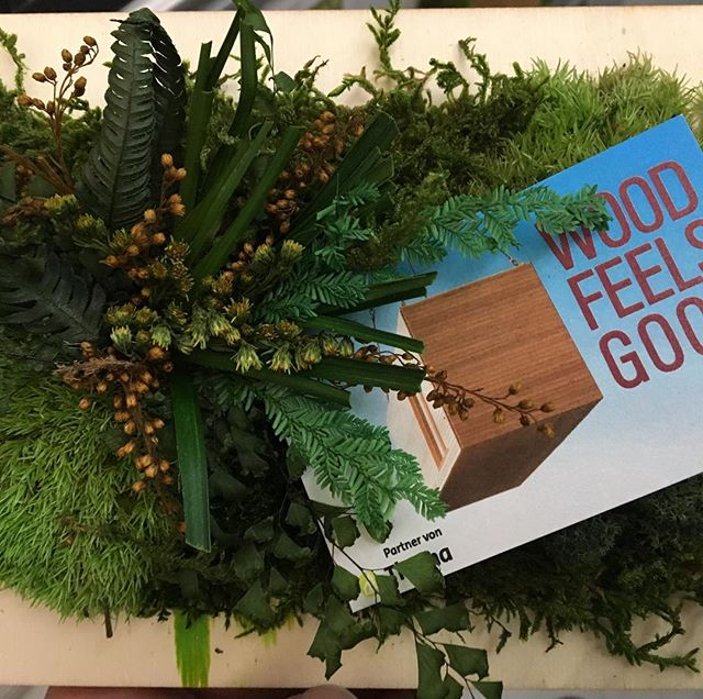 Greenwall 🌳 Nice and Beautifull pice of a plant 🌱 at a greenwall. Just love that 🙏🏼 Look at www.woodfeelsgood.de  #woodfeelsgood #berlin #holz100 #cradletocradle #green #greenwall #sustainability #woodhouse #holzhaus #holzhausberlin #architecture #plant #plastikfrei #holz10berlin #erwinthoma #fullwood #gesund #healty #ilove