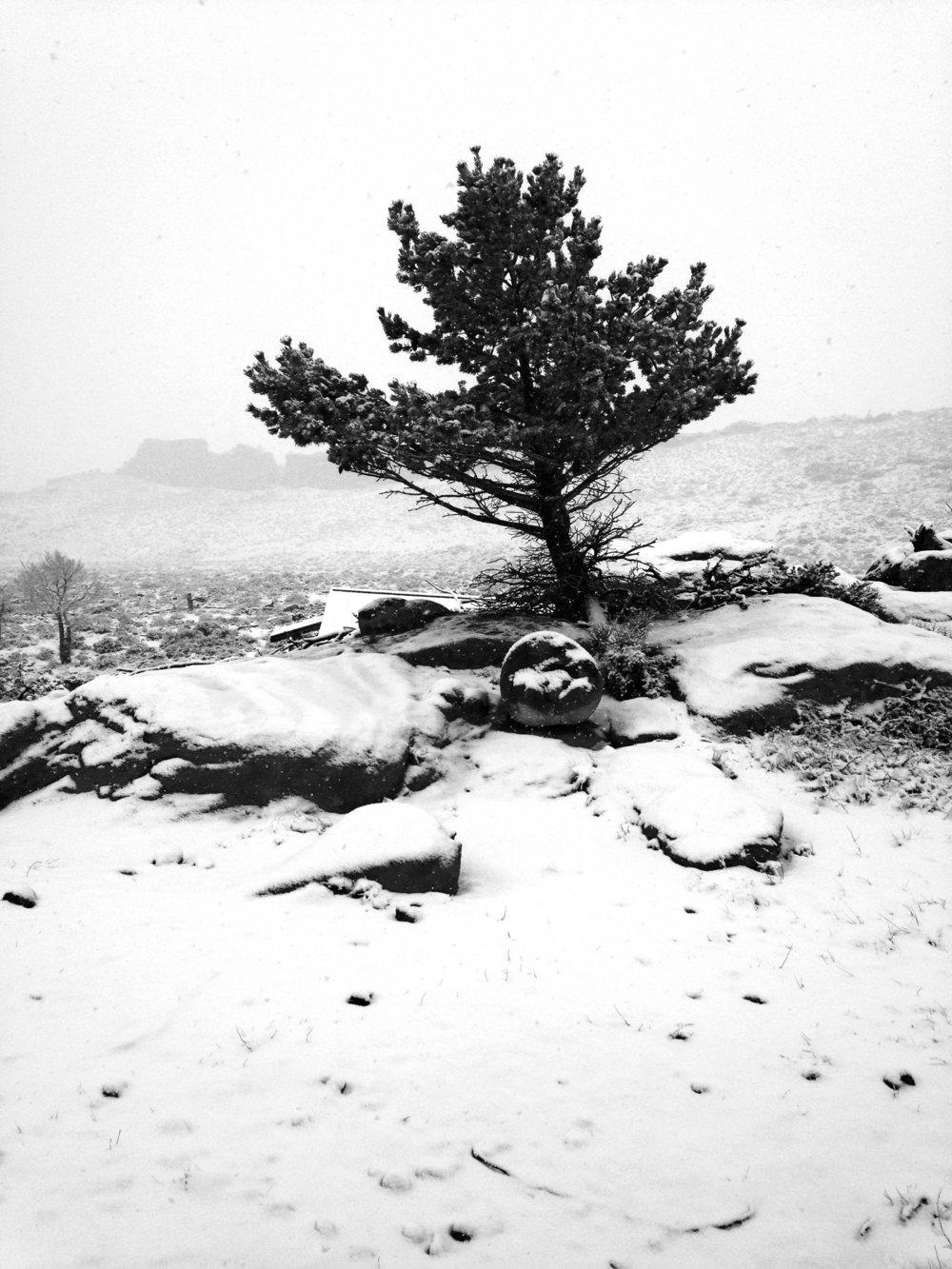 Snowfall, 9 a.m., April 2, 2017, Wapiti, Wyoming.