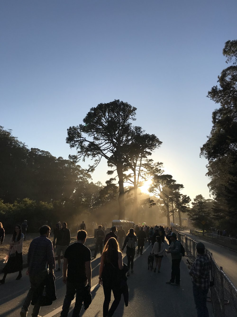 Hardly Strictly Bluegrass festival, Golden Gate Park, Friday, October, 6, 2017. Photograph courtesy of the author.