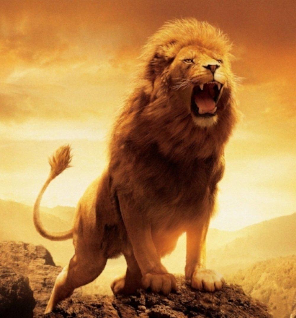 Ett rytande lejon   Andra säger att du inte har potentialen till att göra det du alltid varit lämpad för. Andra säger att dina drömmar inte är verkliga eftersom de aldrig kunnat beskåda dem. Sluta leva upp till andras förväntningar och sluta hänvisa till vad de säger. Om du vet vad du är kapabel till så kommer inte någons kritiska åsikter att spela någon roll. De som avvisar din framgång är samma människor som ännu inte konfronterat sig själva. Deras sätt att undfly sina rädslor är genom att kritisera andra som kämpar för att lyckas. Deras välmående ligger i andra människors misslyckanden. Låt dig inte drabbas av en sådan miserabel omgivning. Lev utan fruktan! Oavsett hur mycket mothugg du möter. Oavsett hur många svårigheter som väntar runt hörnet så är din vilja skapad för att klara av allt som anses som otänkbart. Döda inte dina drömmar genom att hysa rädsla. Var ett rytande lejon. Se framtiden i ögonen tills du inte längre fruktar döden!  - Hamon