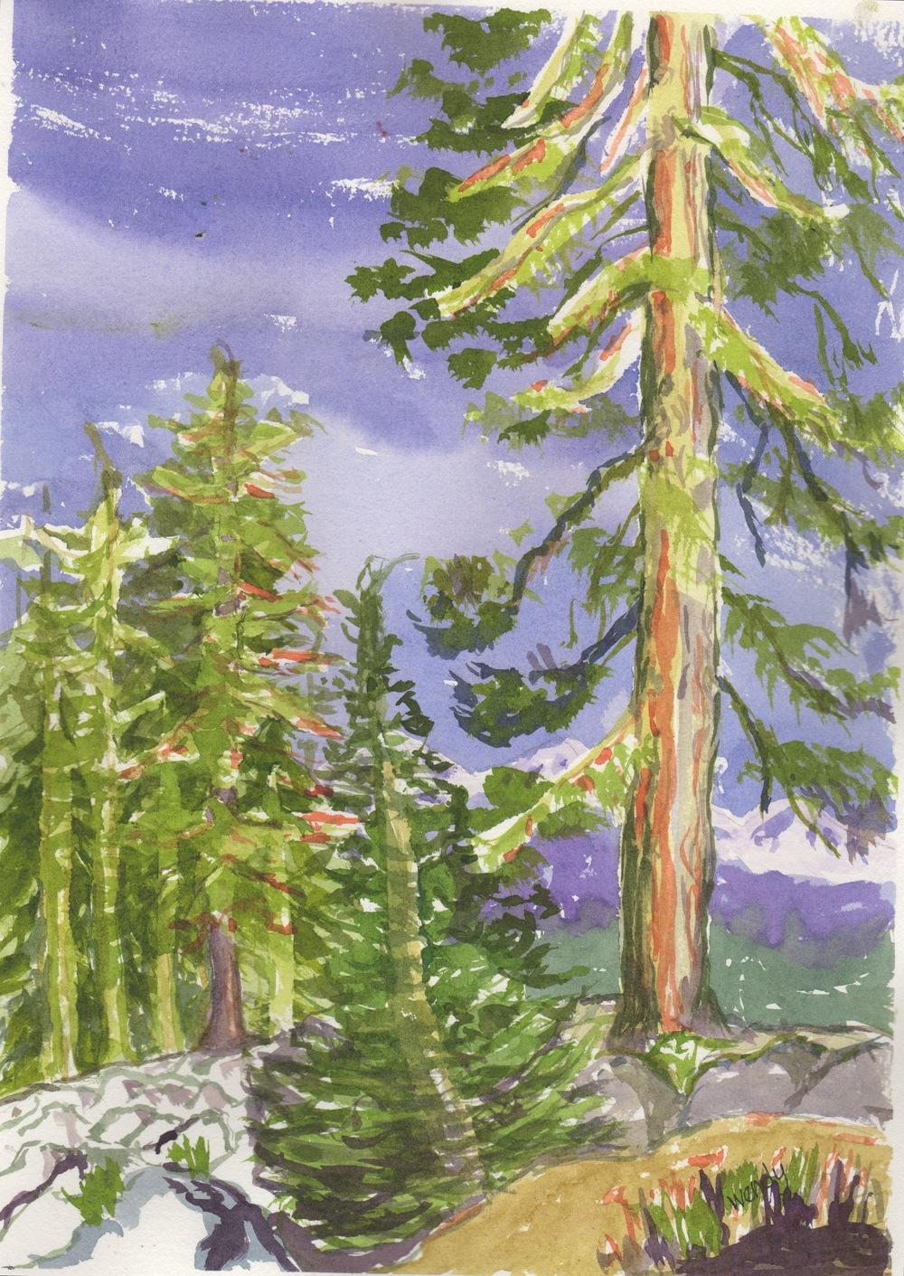 Sierra Pine