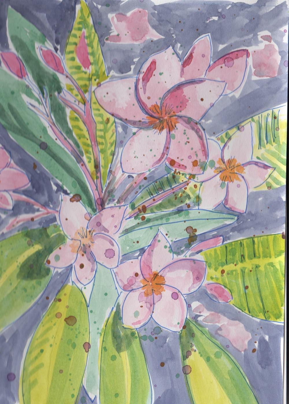 Plumeria, My Favorite Flower
