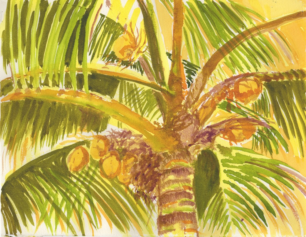 Palm Study