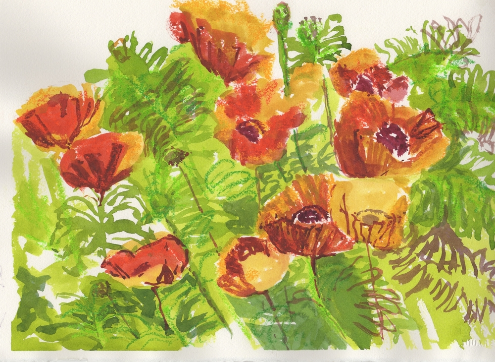 Susan's Red Poppies