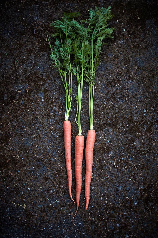 Garden_Carrots_Fresh.jpg