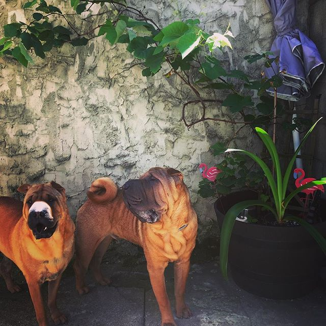 Look at this duo 😍😍😍